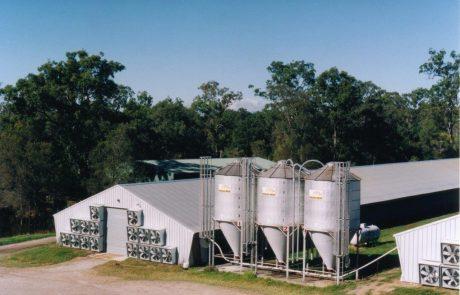 Broiler Farm 2