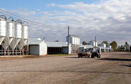 Broiler Farm 3