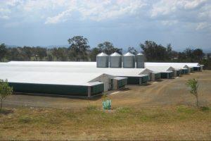 Broiler Farm 1