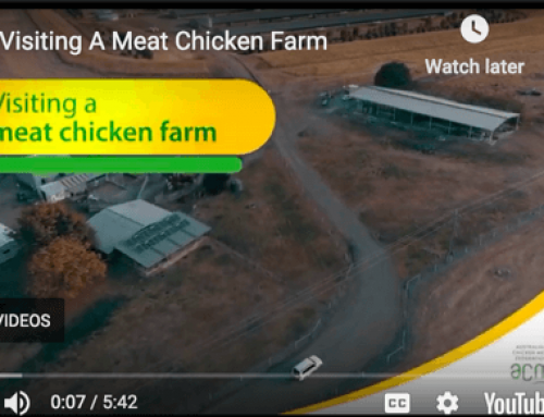 Take a ('Virtual') Tour of an Australian Chicken Farm